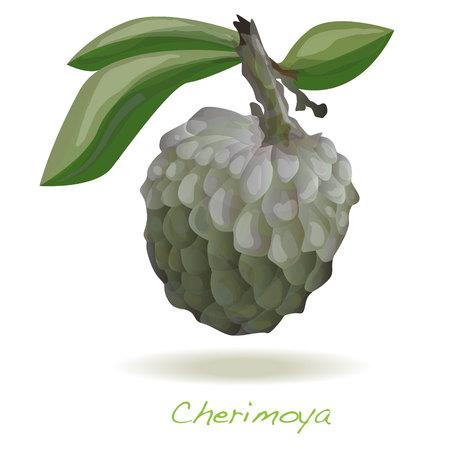 chirimoya: Custard apple or cherimoya isolated