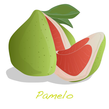 Pamelo illustration isolated