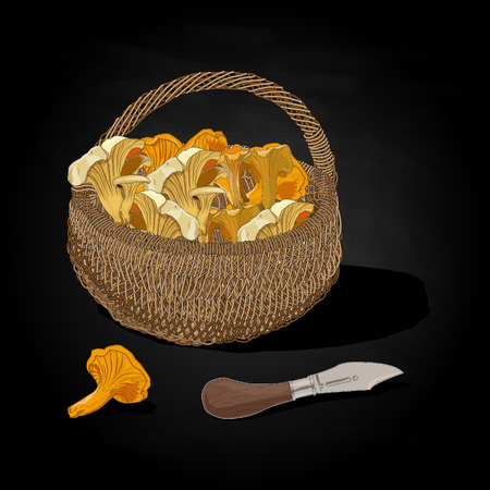 Mushrooms in the basket illustration. Isolated. Stock Photo