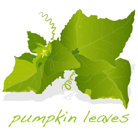 Pumpkin leaf isolated Stock Photo
