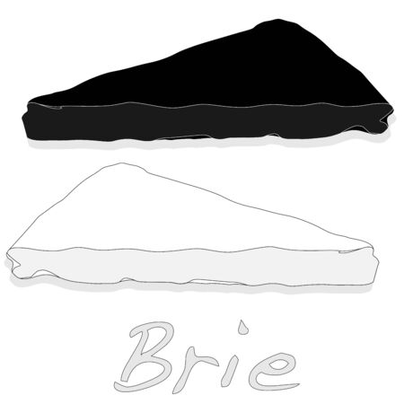 Brie cheese vector  isolated artwork