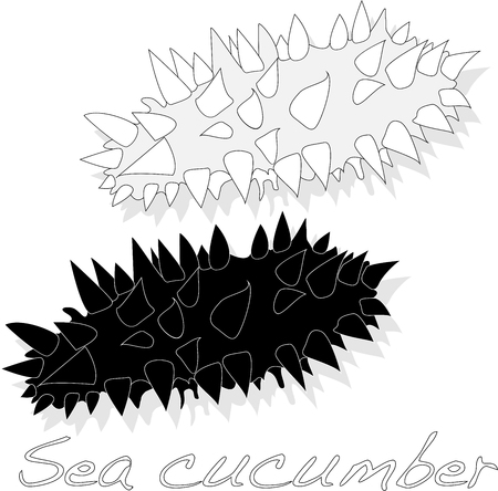 resemblance: Sea cucumber vector illustration isolated on white background Illustration