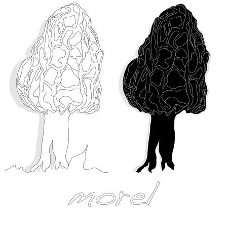 morel, yellow morel, true morel and sponge morel - edible mushrooms (Morchella esculenta) vector illustration