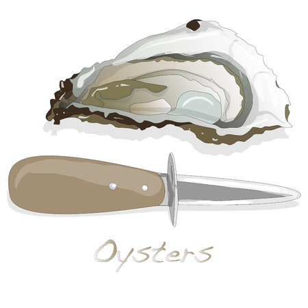 Fresh opened oyster on white background.
