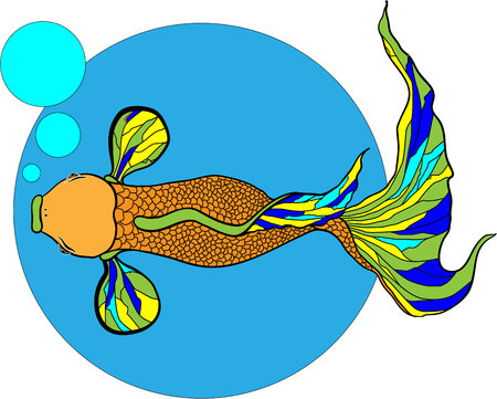 Illustration of koi carp, fish. Vector.