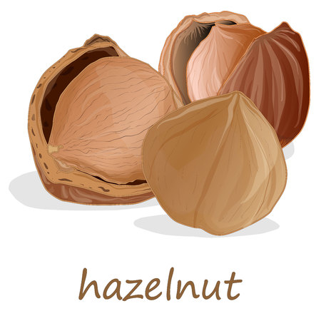 Closeup of hazelnuts on the white background, vector illustration.