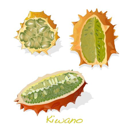 kiwano melon on white background illustration set Illustration