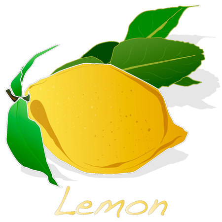 Collection of lemon fruit illustrations  isolated on white