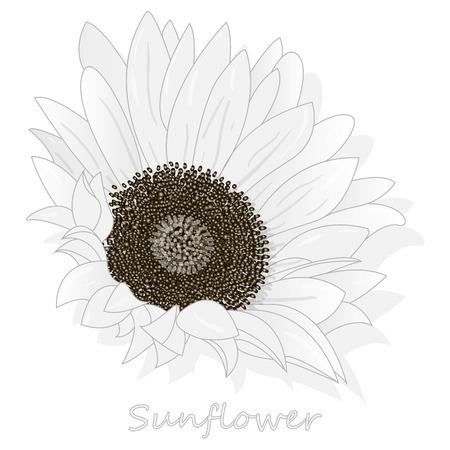 Sunflower isolated on white background illustration set Illustration