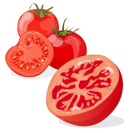Tomato isolated on white background illustration set