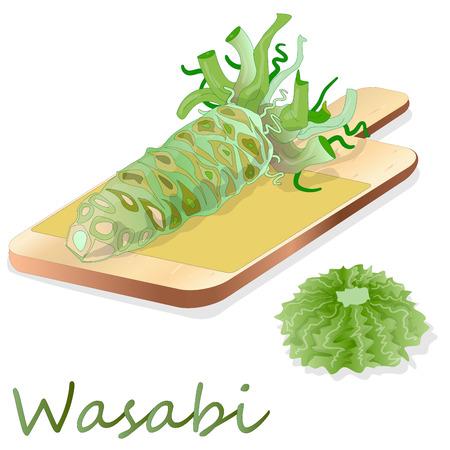 Wasabi Japanese horseradish illustration on white background.