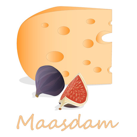 Maasdam cheese. Vector illustration of maasdam cheese isolated on white background.