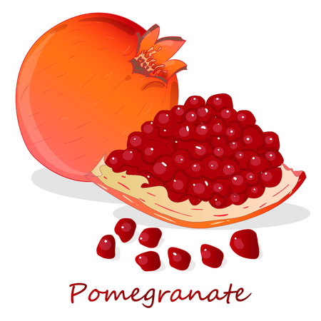 Pomegranate hand drown vector illustration isolated on white background. Illustration