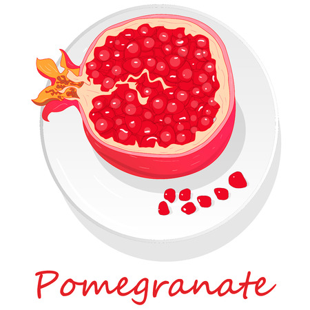 Pomegranate hand drown vector illustration isolated on white background. Ilustrace