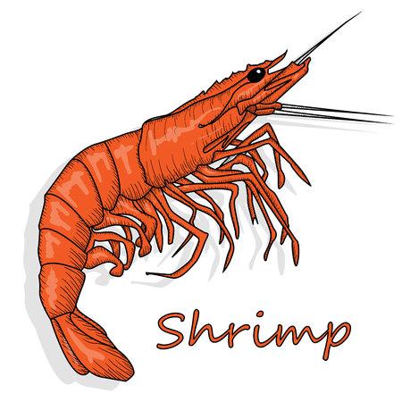 Illustration vectorielle de crevettes cuites ou de crevettes tigrées isolée sur fond blanc comme élément de conception de colis.