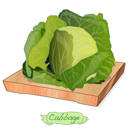 Cabbage on wood deck vector illustration set isolated on white Stock Vector - 125360401