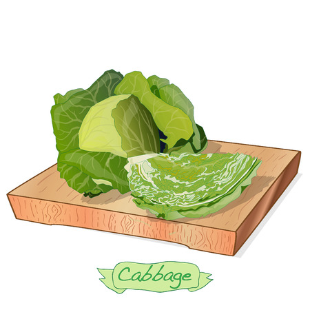 Cabbage on wood deck vector illustration set isolated on white