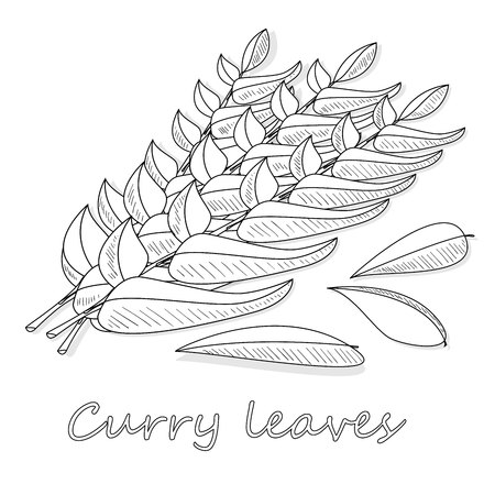 Herbs and spices collection curry leaves - vector illustration. Illustration