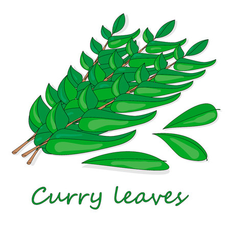 Herbs and spices collection curry leaves - vector illustration. Ilustração