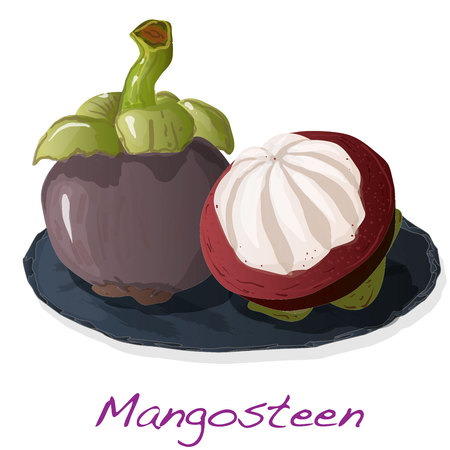 Ripe mangosteen isolated on the plate. Compositioin on white background. Vector illustration. Stock Vector - 125360471
