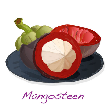 Ripe mangosteen isolated on the plate. Compositioin on white background. Vector illustration. Illustration