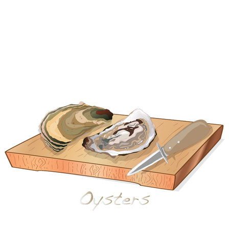 Fresh opened oyster vectorv images set on plate / dish isolated on white background. Standard-Bild - 121662868