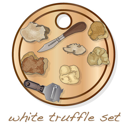 White truffle illustration set on dish isolated white background.