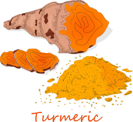 Turmeric (Curcuma longa Linn) powder and root on white background vector illustration.