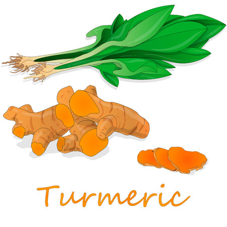 Kurkuma (Curcuma Longa Linn) Pulver und Wurzel auf weißem Hintergrund-Vektor-Illustration.