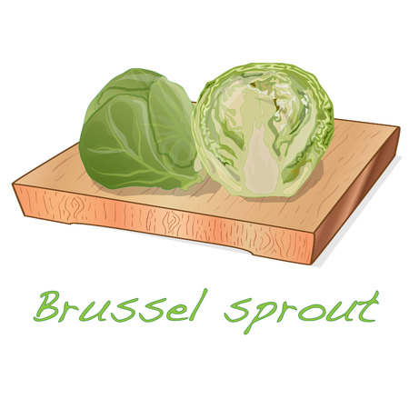 A pile of Brussels sprouts on the dish vector illustration. White background.