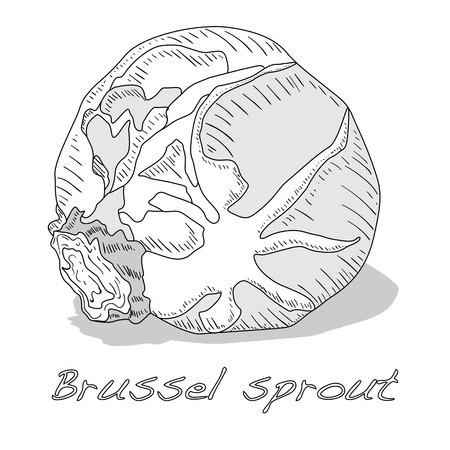 Brussel sprou tvector Abbildung. Weißer Hintergrund. Vektorgrafik