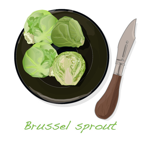 A pile of Brussels sprouts on the dish vector illustration. White background. Foto de archivo - 124529898