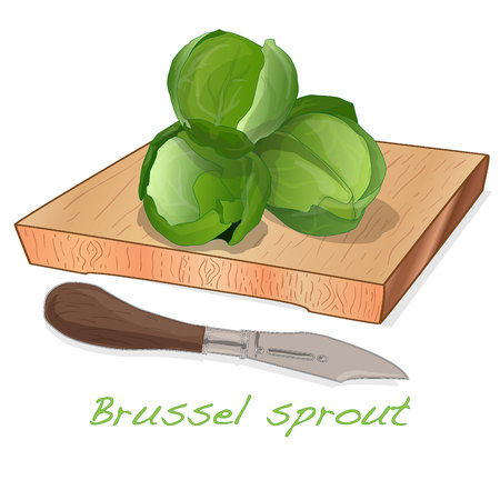 A pile of Brussels sprouts on the dish vector illustration. White background. Foto de archivo - 124529900