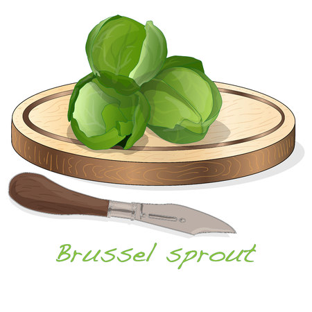 A pile of Brussels sprouts on the dish vector illustration. White background. Foto de archivo - 124529901