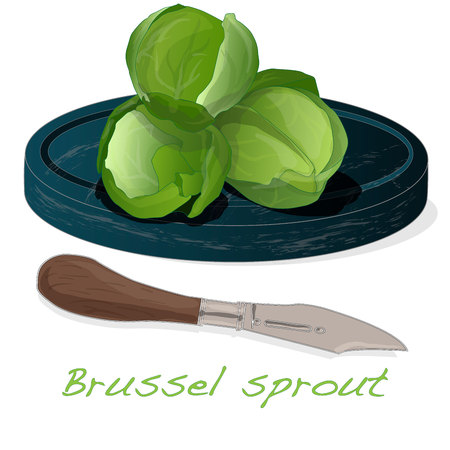 A pile of Brussels sprouts on the dish vector illustration. White background. Foto de archivo - 124529903