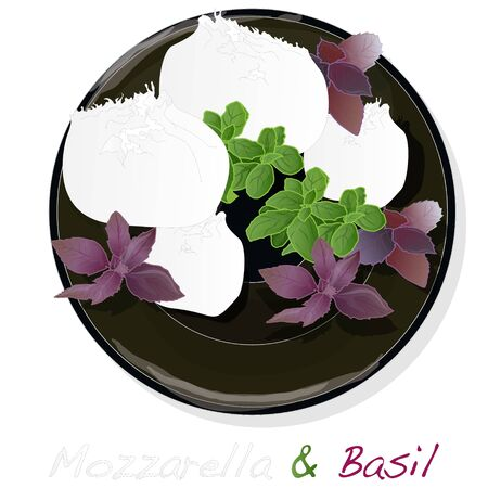 Traditional Italian Mozzarella cheese and basil on plate. White background. Vector illustration.