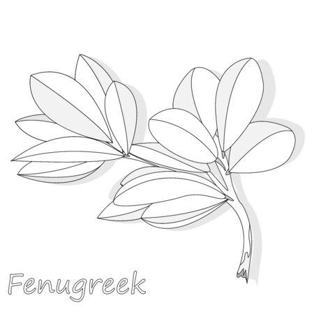 Methi, fenugreek leaves vector illustration on white background. isolated image. Illustration