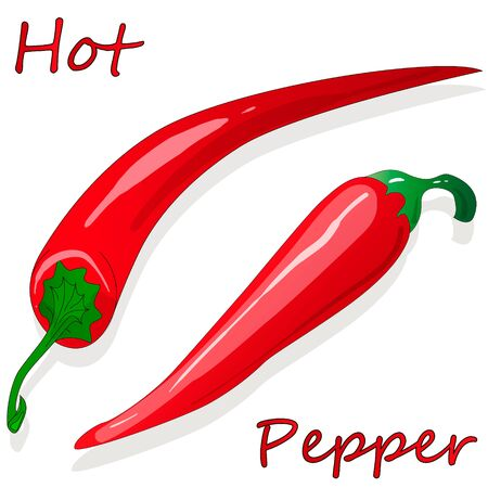 Closeup view pepper on white background, raw food ingredient concept. Hand made vector illustration. Иллюстрация