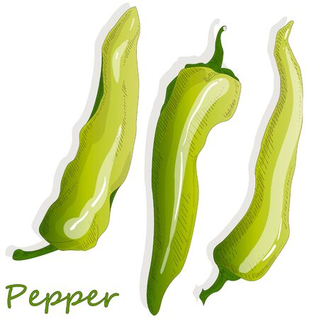 Closeup view pepper on white background, raw food ingredient concept. Hand made vector illustration. Çizim