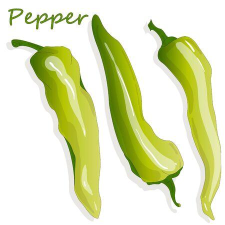 Closeup view pepper on white background, raw food ingredient concept. Hand made vector illustration. Ilustração