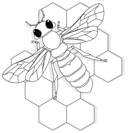 Vector illustration of honey bee on white background. Coloring image. 向量圖像