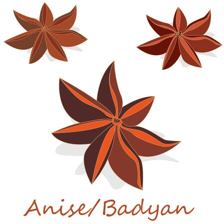 Star anise  badyan spice fruits and seeds isolated on white background vector illustration.