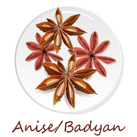Star anise / badyan spice fruits and seeds isolated on white background vector illustration.
