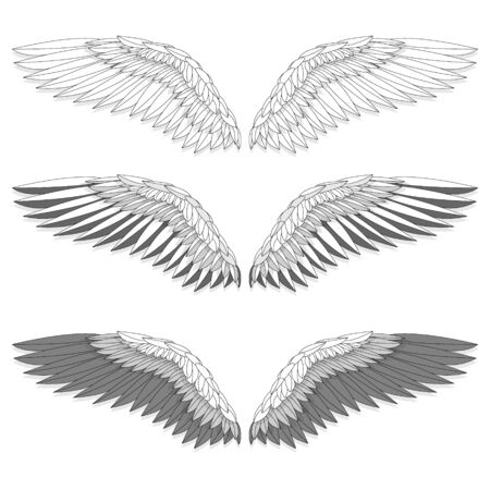Bird wings set isolated on a white background. Vector illustration.