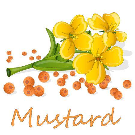 Zbiór ilustracji wektorowych gorczycy: nasiona gorczycy, kwiat, liście i pod. Na białym tle. Ilustracje wektorowe