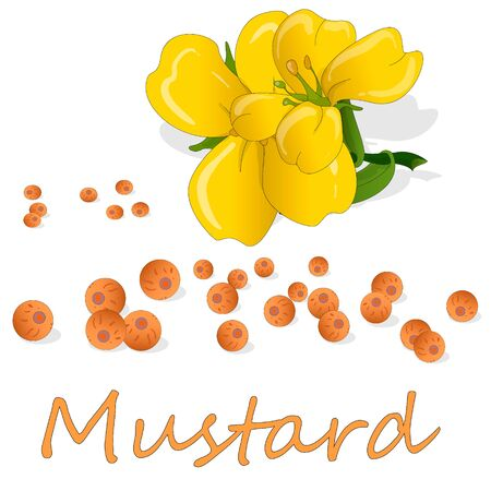 Collection of mustard vector illustrations: mustard seeds, flower, leaves and pod. Isolated on white background.