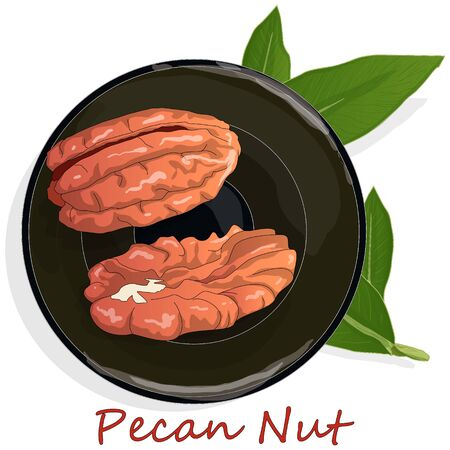 Pecan nut on plate isolated on white background. Vector illustration.