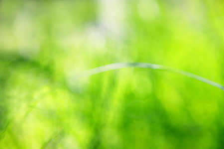 Blurred grass abstract background, universal use