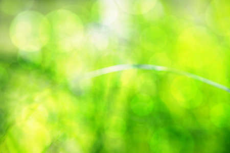 Blurred grass abstract background plus bokeh effect, universal use Stock Photo