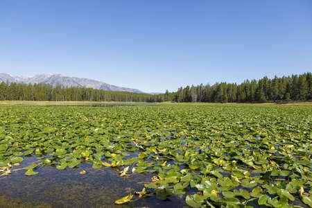 oxbow: teton national park, wyoming, USA Stock Photo